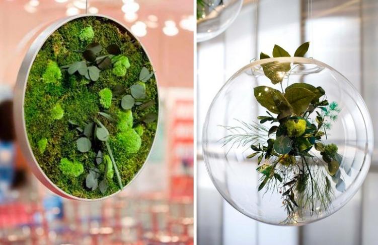 Cuadros vegetales y plantas de diferentes tamaños de Monamour natural design